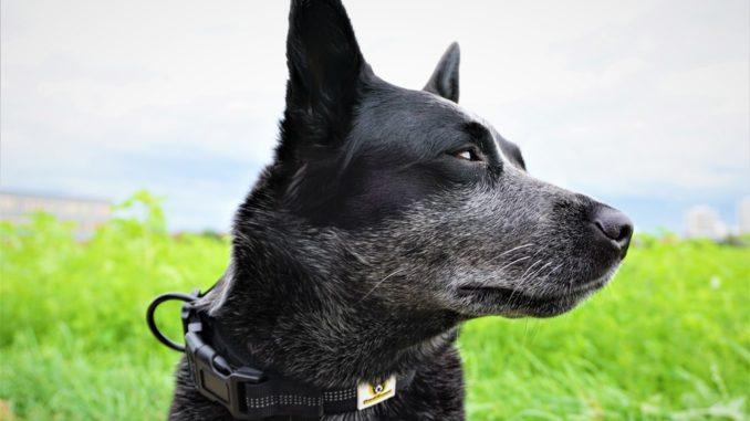 Hundefreund Halsband