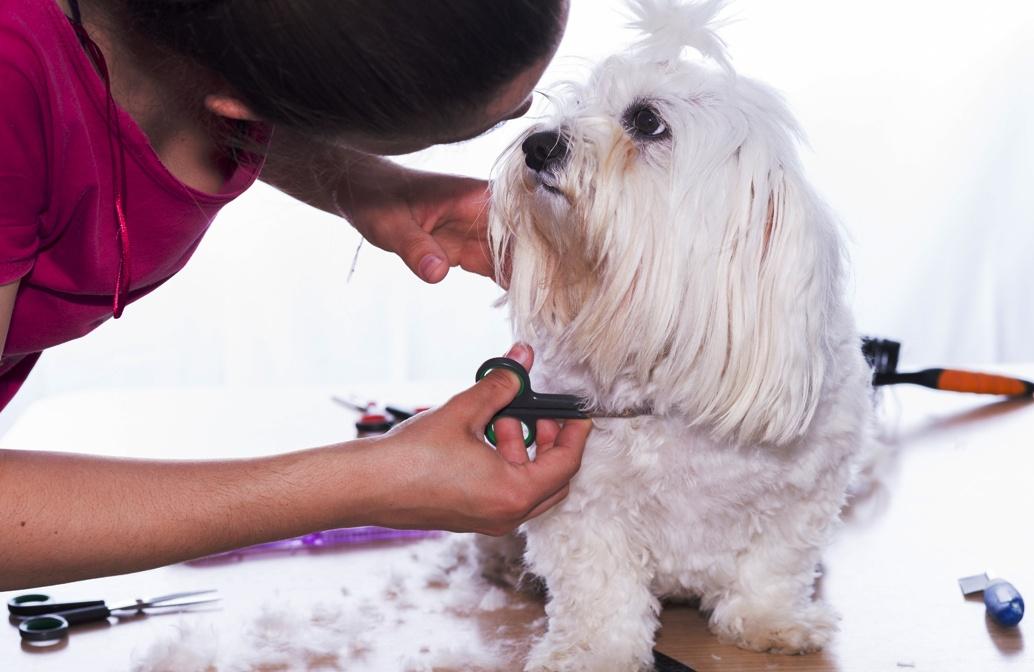 Hundeschere von Hundefreund